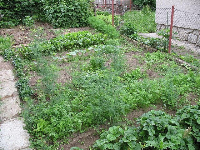 Zarůstající záhonky na zahradě